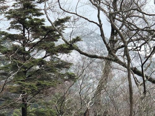 11霧氷の頂仙岳を望む.jpeg