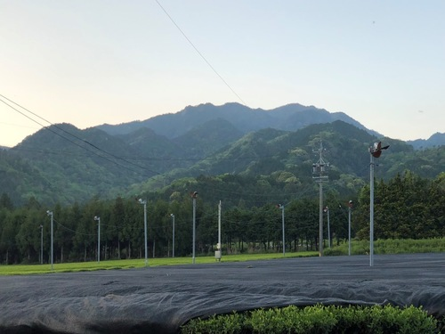17仙ヶ岳を振り返る.jpeg