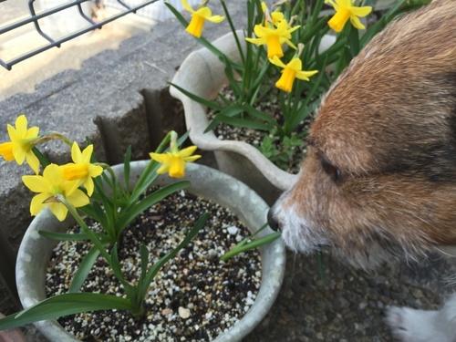 きれいなお花だなあ、でもおいしそう……(食べないでね!).jpg