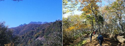 伯母峰峠からの大普賢岳(左)と明るい自然林の尾根をゆく(右).jpg