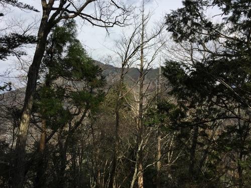 木の間に望むアンショウ山.jpg