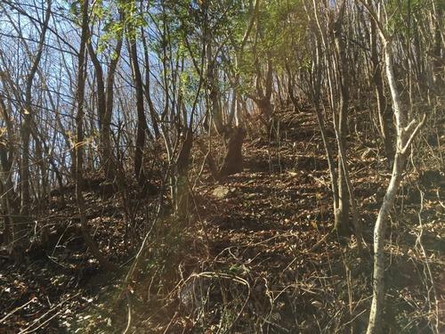 木洩れ日の雑木林.jpg