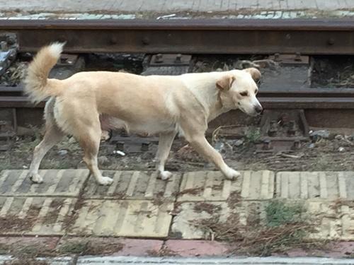 洛陽含嘉倉で出会った犬.JPG