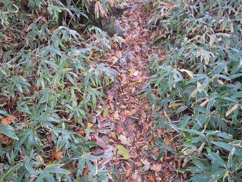 秋の小径.JPG
