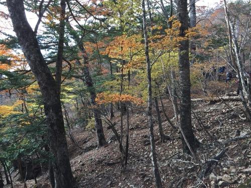色づく自然林.jpg