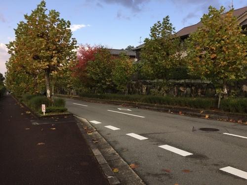 色づく街路樹.jpg