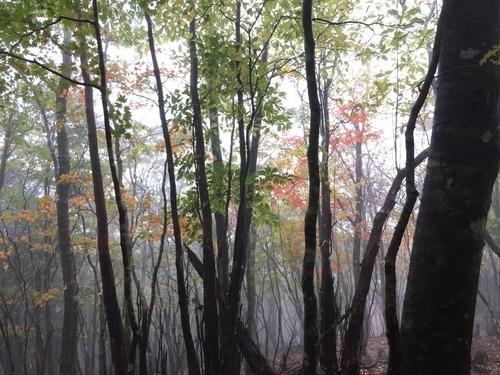 雨に煙る紅葉の山.jpg
