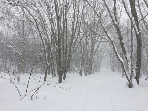 雪の越水が原.jpg