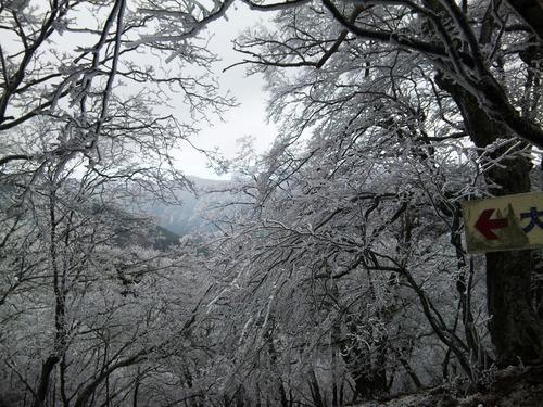 霧氷の尾根道から.jpg