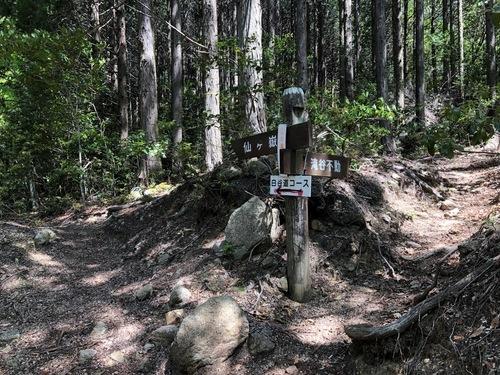 1南尾根コース(左)と白谷道コース(右)の分岐.jpeg