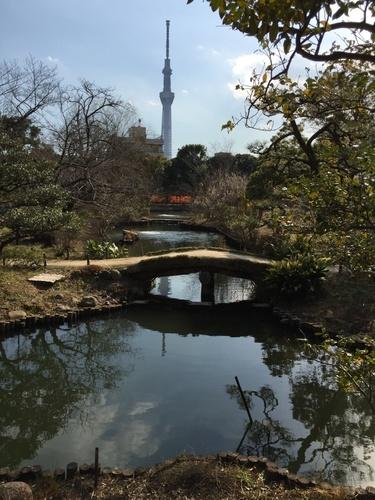 向島百花園とスカイツリー.JPG